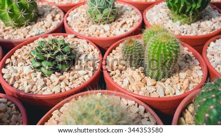Big collection of Cactus family.
