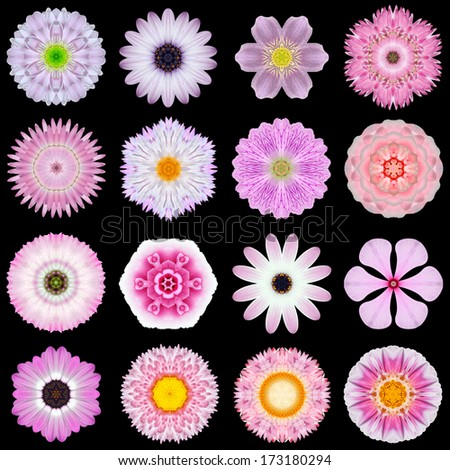 Big Collection of Various Pink Flowers. Kaleidoscopic Mandala Patterns Isolated on Black Background. Concentric Rose, Daisy, Primrose, Sunflower, Carnation, Marigold, Flowers in Purple and Pink color. - stock photo