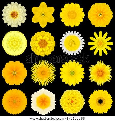 Big Collection of Various Yellow Flowers. Kaleidoscopic Mandala Patterns Isolated on Black Background. Concentric Rose, Daisy, Primrose, Sunflower, Carnation, Marigold,  Flowers in Yellow colors. - stock photo