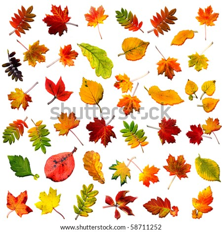 big collection set of close up beautiful colored autumn leaves with shadows isolated on white background - stock photo