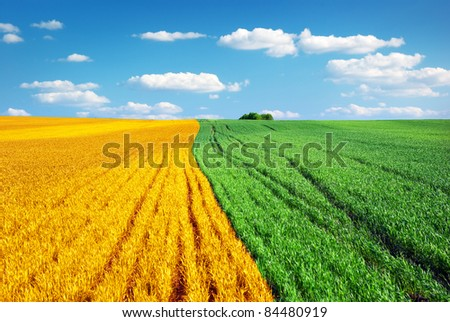Big colorful meadow. Nature conception. - stock photo