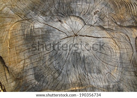 big cutting tree brown background