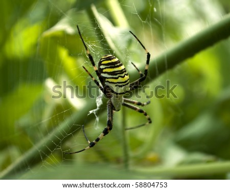 Big dangerous spider in the web - stock photo