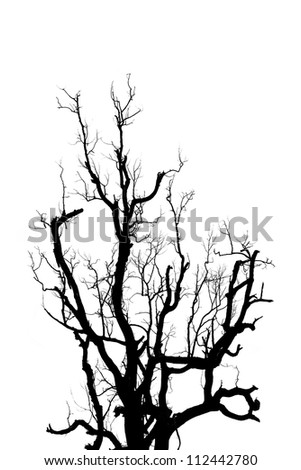 Big dead tree silhouette isolated on white. - stock photo
