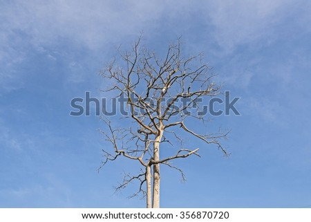 Big Dead tree with twigs on blue sky background - tree dead sky blue nature background dry clouds old wood tree - stock photo