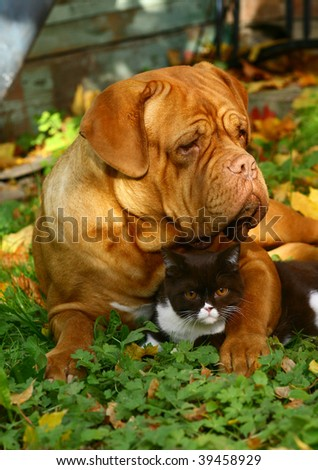 Big dog and small kitten against autumn foliage. - stock photo