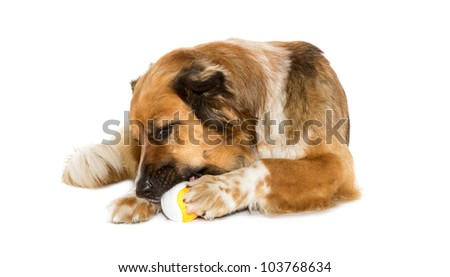 Big dog with a ball on white background - stock photo