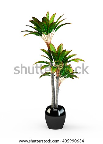 Big dracaena palm in a pot isolated on white background. 3D Rendering, 3D Illustration.