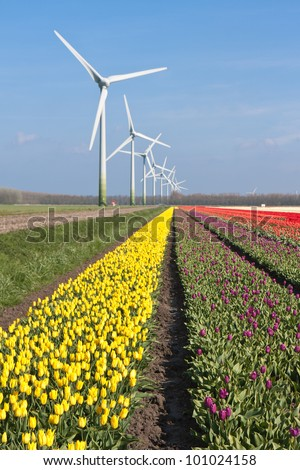 Big Dutch colorful tulip fields with windturbines - stock photo