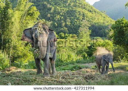Big elephant and baby - stock photo