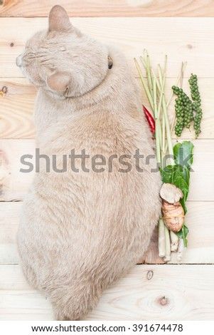 big fat cat from top view with food ingredient on wood background, eat cat concept. - stock photo