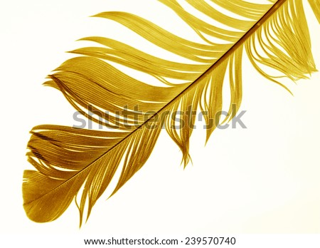 Big  feather on white background