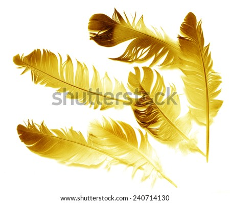 Big  feather on white background - stock photo