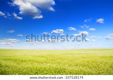Big field of flowers under blue sky. Composition of nature - stock photo
