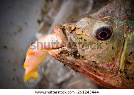 Eyes bigger than mouth stock photos royalty free images for Big fish eat little fish