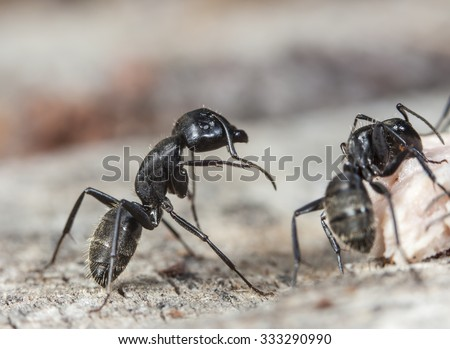 big forest ant in a native habitat - stock photo