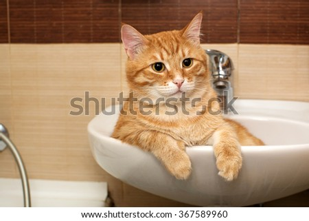 Big ginger cat lies in the sink