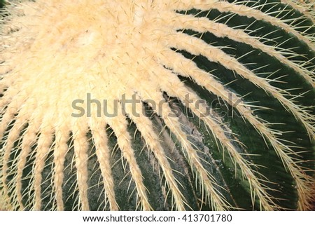 """Big """"Golden Barrel Cactus"""" (or Golden Ball, Mother In Laws Cushion) in St. Gallen, Switzerland. Its scientific name is Echinocactus Grusonii, native to east and central Mexico. - stock photo"""