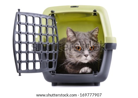 Big gray cat sitting in plastic cage on white background