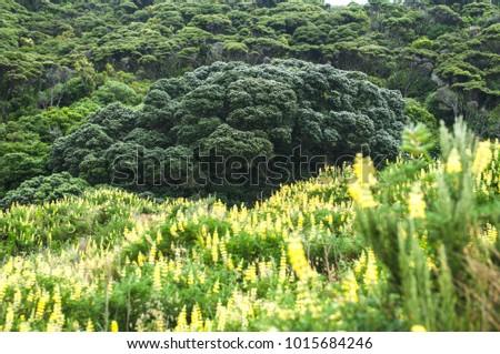 Big green broccoli tree yellow flowers stock photo edit now big green broccoli tree with yellow flowers in front mightylinksfo