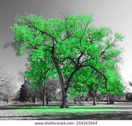 Big green tree in a black and white landscape - stock photo