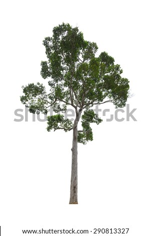 Big green tree isolated on white