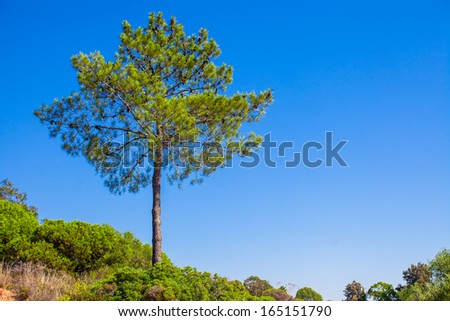 Big green tree on background blue sky