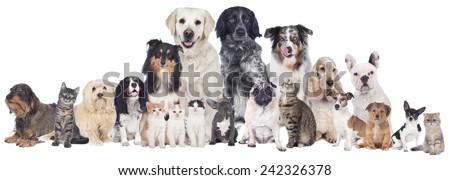 Big group of pets isolated - stock photo