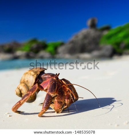 Big hermit crab on the tropical island - stock photo