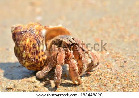 Big hermit crab on the tropical island - stock photo