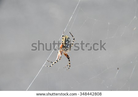 Big Insect Spider and Web into the Wild - stock photo