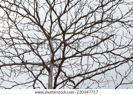 Big leafless tree on white sky background