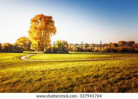 Big linden tree with gold leaves, walking path and grass.  Autumn landscape. Beauty in nature  - stock photo