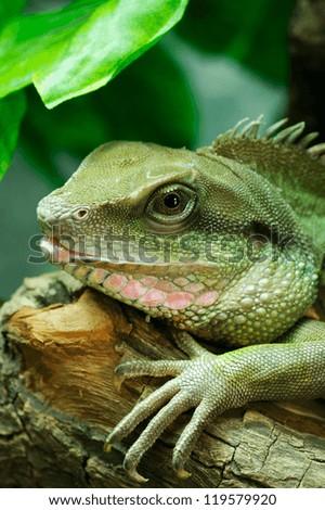 Big lizard - stock photo