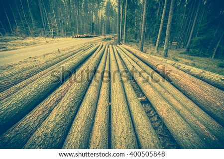 Big logs of wood in the forest, landscape of deforestation. Country road and felled tree trunks, pine tree logging, vintage photo  - stock photo