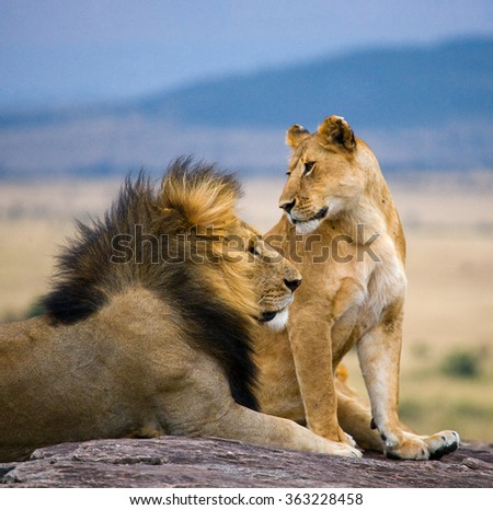 Big male lion with gorgeous mane and lioness on a big rock. National Park. Kenya. Tanzania. Masai Mara. Serengeti. An excellent illustration. - stock photo