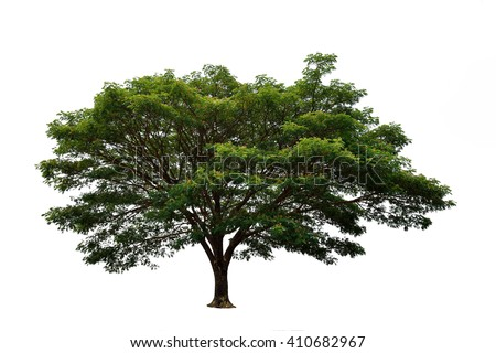 how to draw a acacia tree