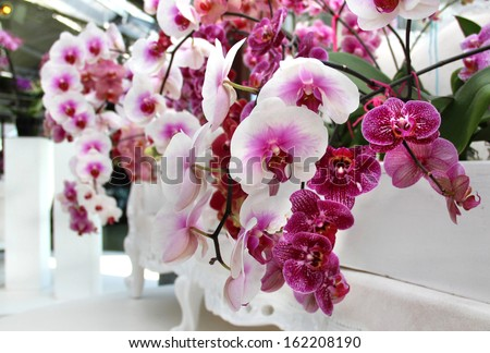Big mix of beautiful amazing orchids - stock photo