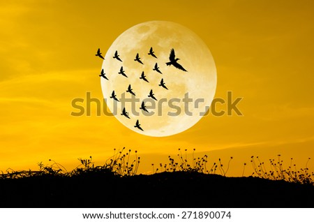 Big moon and birds silhouettes background sun set. Leadership Concep - stock photo