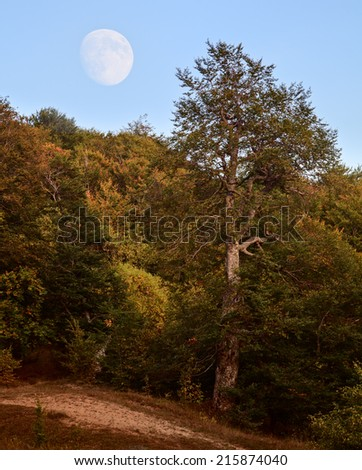 Big moon in the sky above the forest. - stock photo