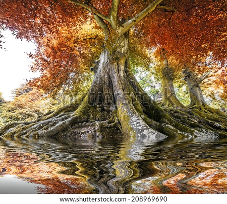 big old tree - autumn time - stock photo