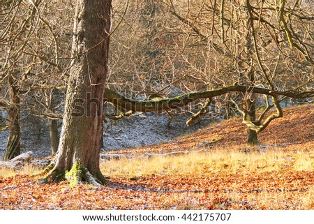 big old tree with bare branches in autumn