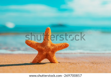 big orange starfish on the seashore. summer concept with copy space.