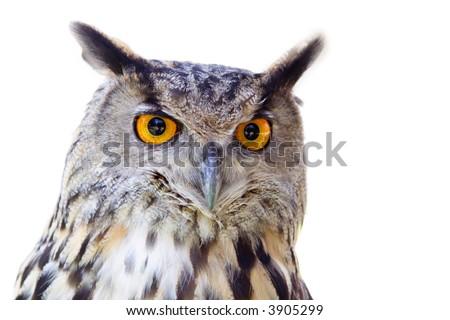 Big owl isolated - stock photo