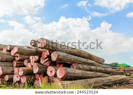 Big Padauk timber storage yard for raw material. - stock photo