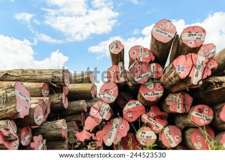 Big Padauk timber storage yard for raw material in factory. - stock photo