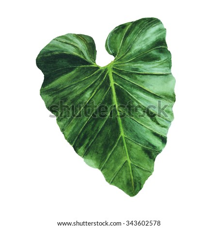 Big painted tropical leaf on white background. - stock photo
