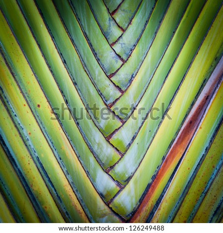 Big palm folding branches abstract closeup - stock photo