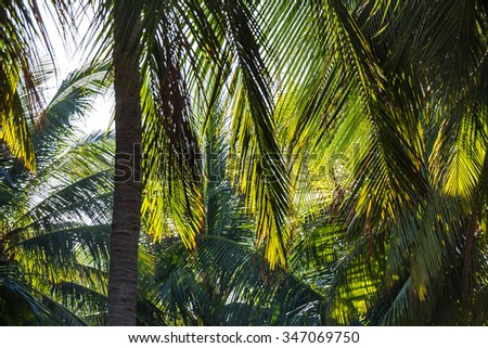Big Palm tree leafs in Nha Trang, Vietnam - stock photo