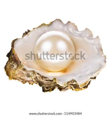 Big pearl in an oyster shell, isolated on a white background .